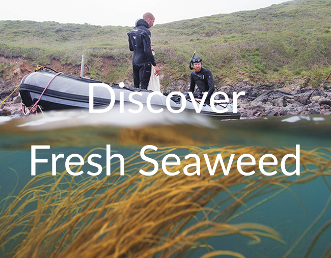 fresh-seaweed1