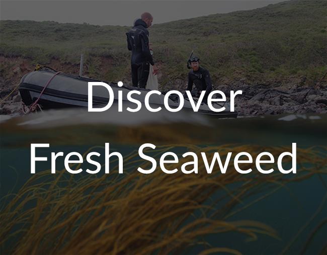 fresh-seaweed2