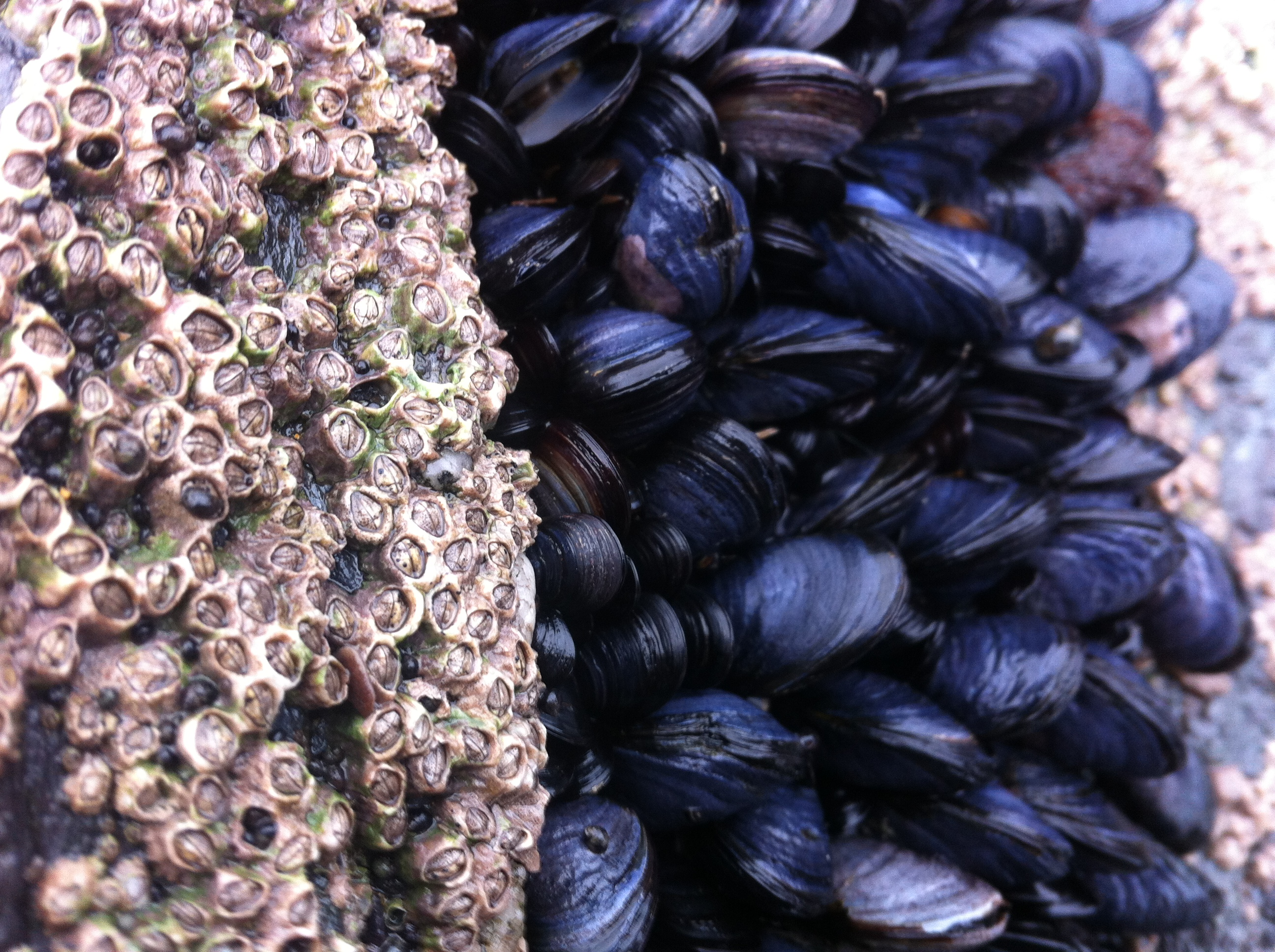 Foraged foods, this is a great time for mussels and wild garlic