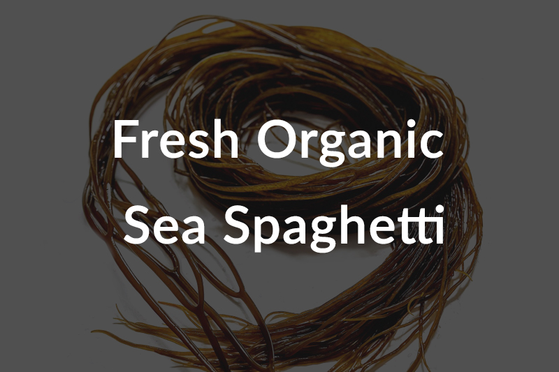 fresh-organic-sea-spaghetti-over