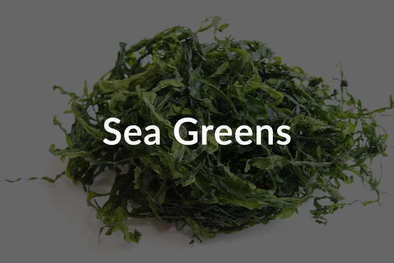 sea-greens-over