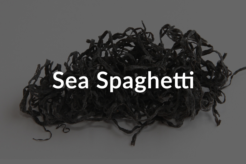 sea-spaghetti-over