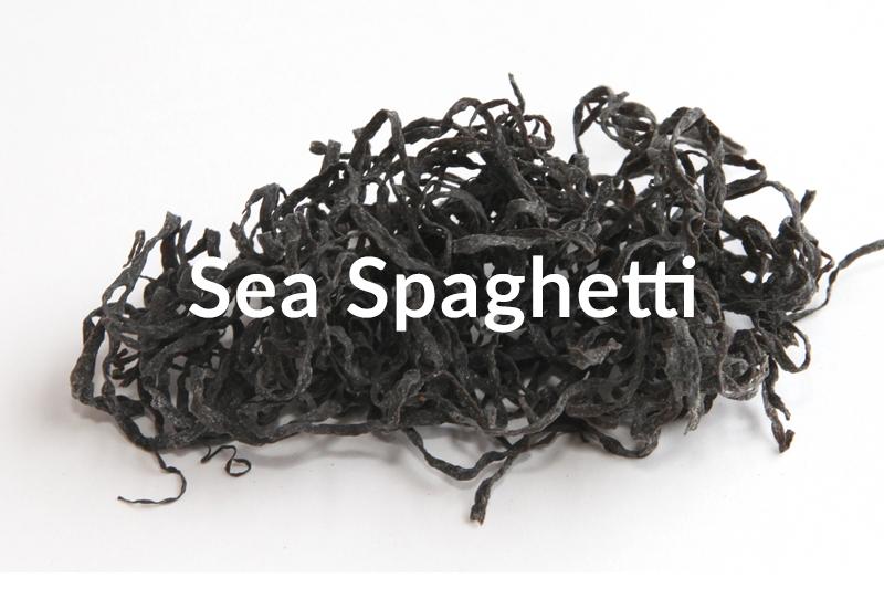 sea-spaghetti