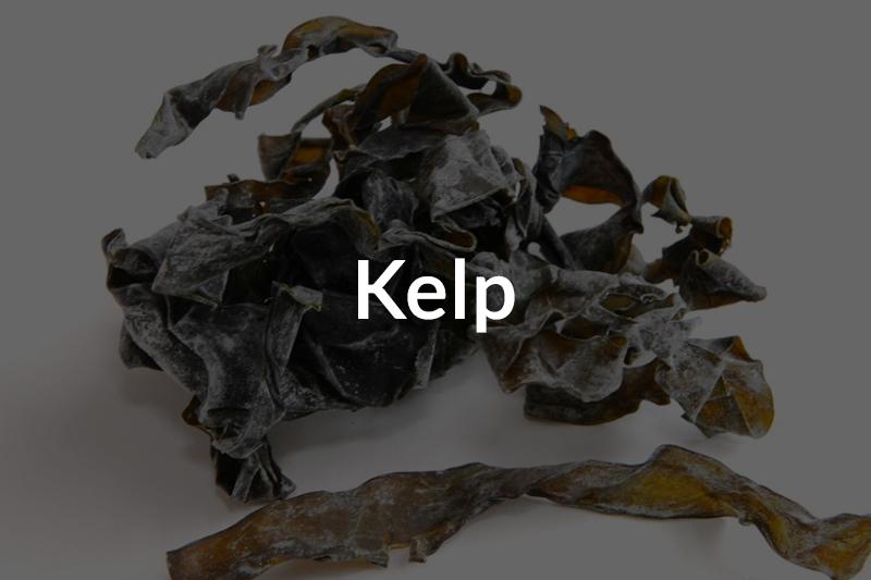 kelp-over